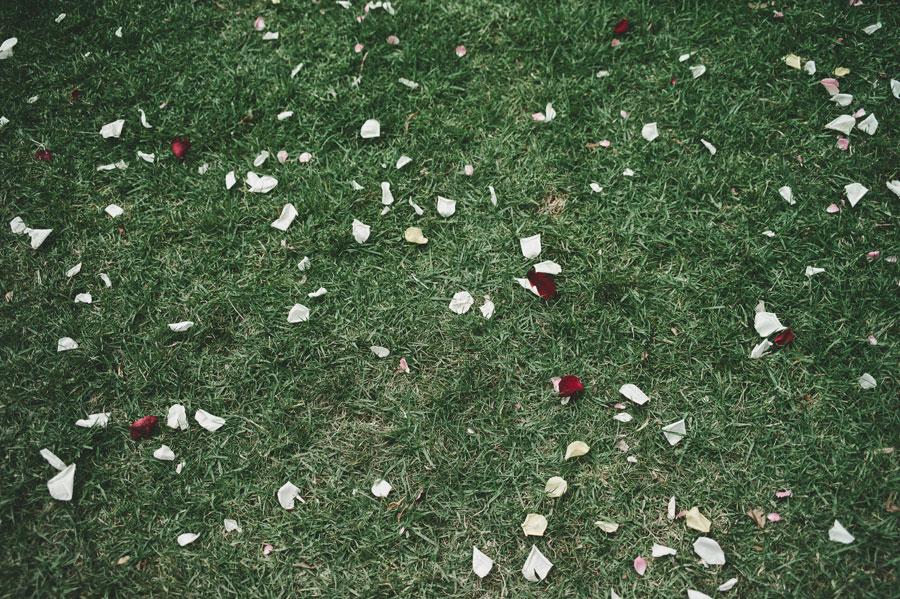 Flower petals on Melbourne Treasury Garden