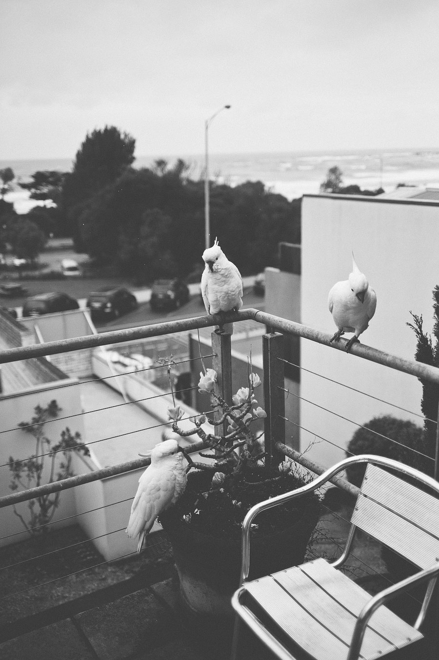 Pheonix apartments - parrots on the balcony