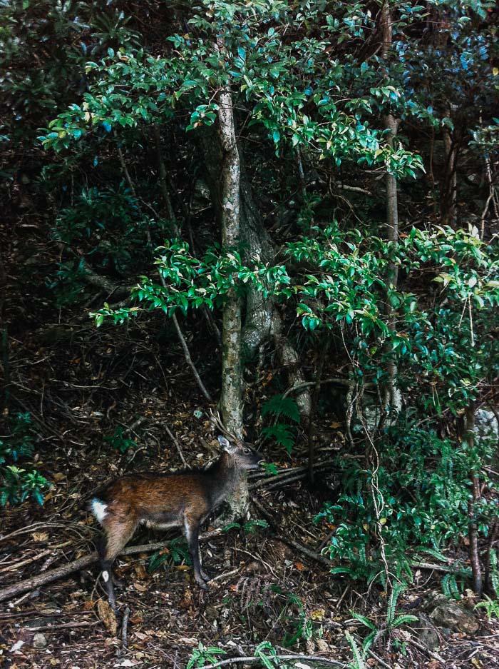Yakushima forest, Japan