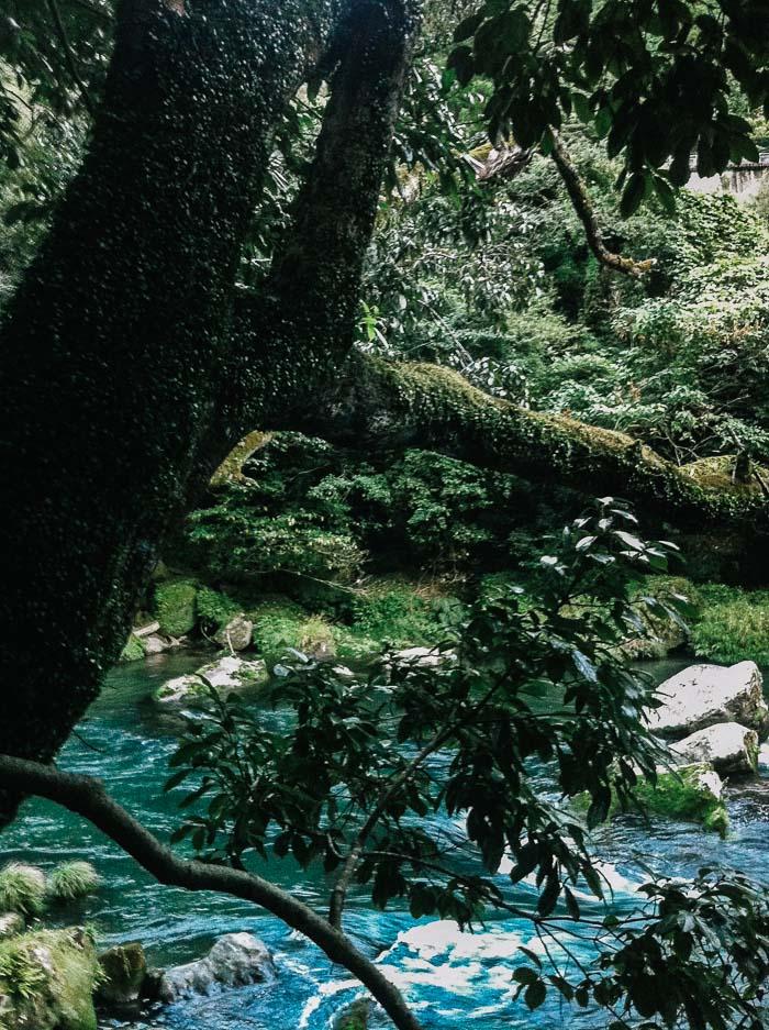 Tree branch in Kagoshima Japan