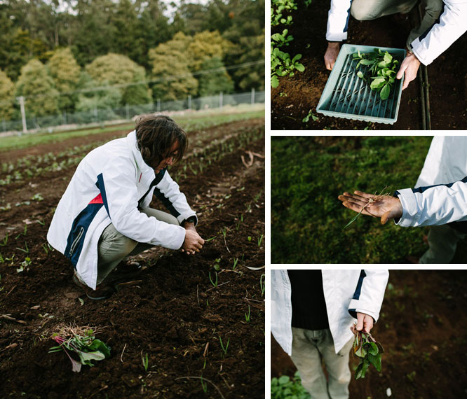 Shannon Bennett Picking Fresh Plants Melbourne
