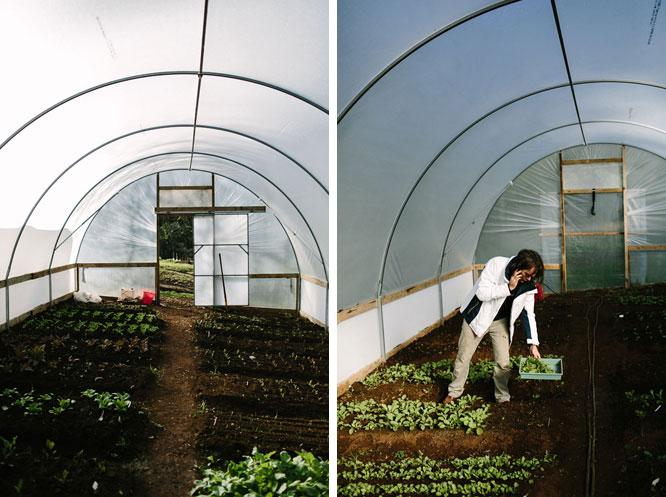 Shannon Bennett greenhouse Melbourne