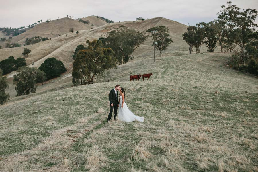 Melbourne countryside wedding photographer cow
