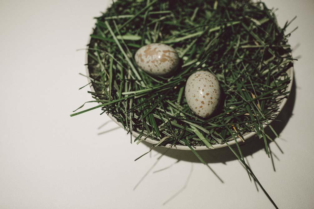 Pukeko egg - Attica