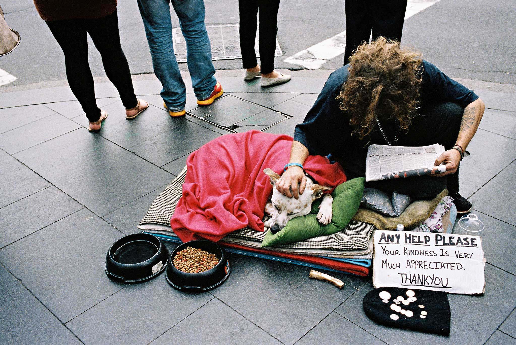 homeless-sydney-intersection-dog