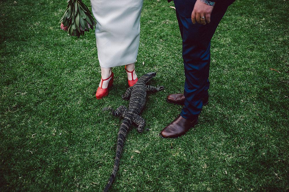 healesville-sanctuary-wedding-lizard