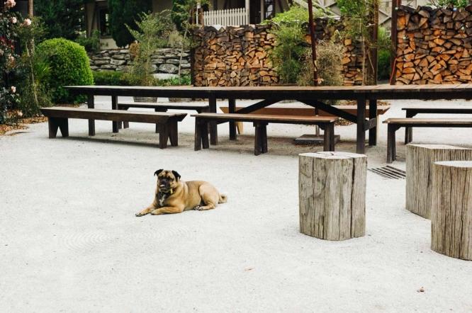 Queenstown-Sherwood-Hotel-dog