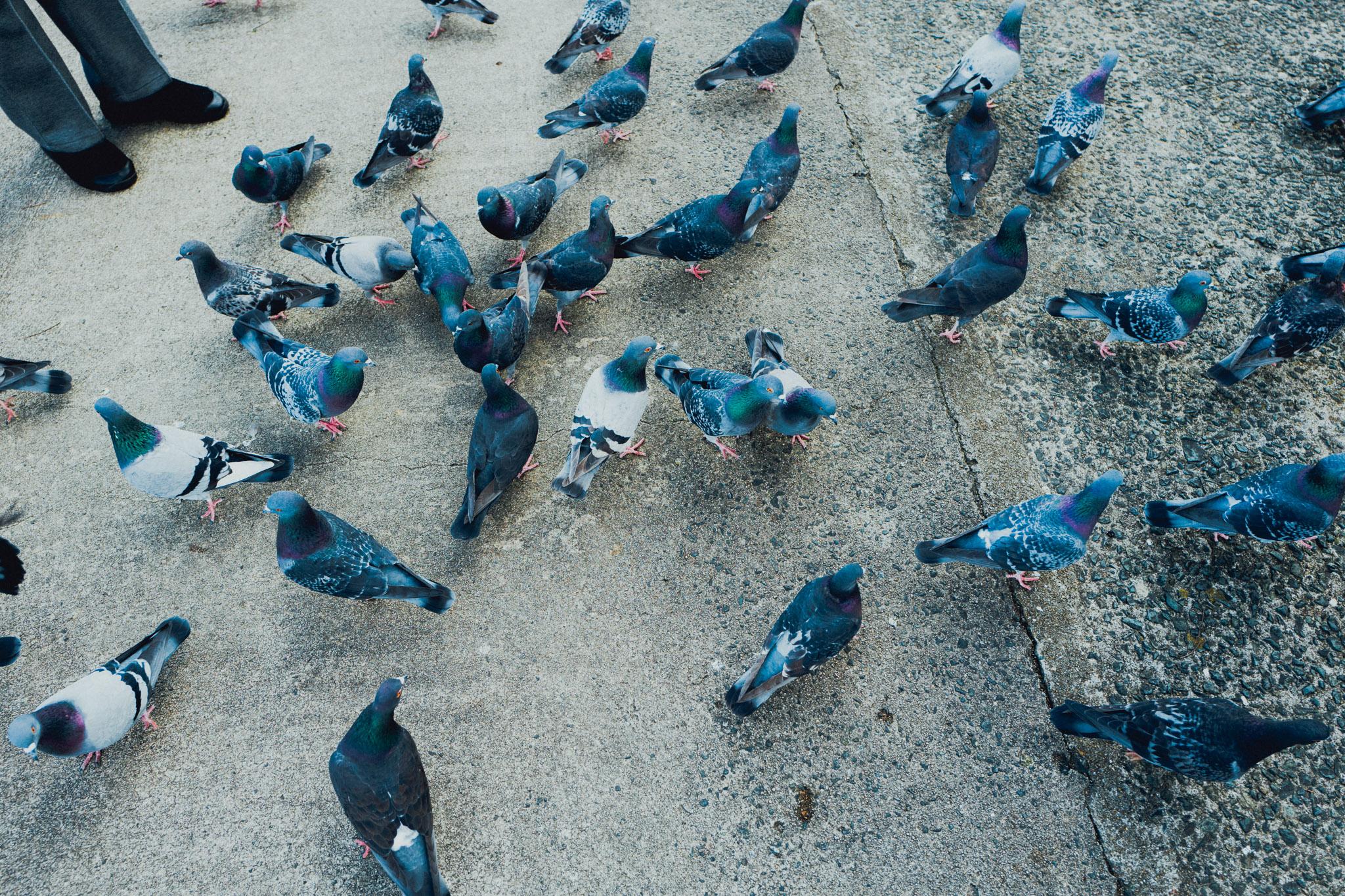 leica-q-photographer-birds-fukuoka