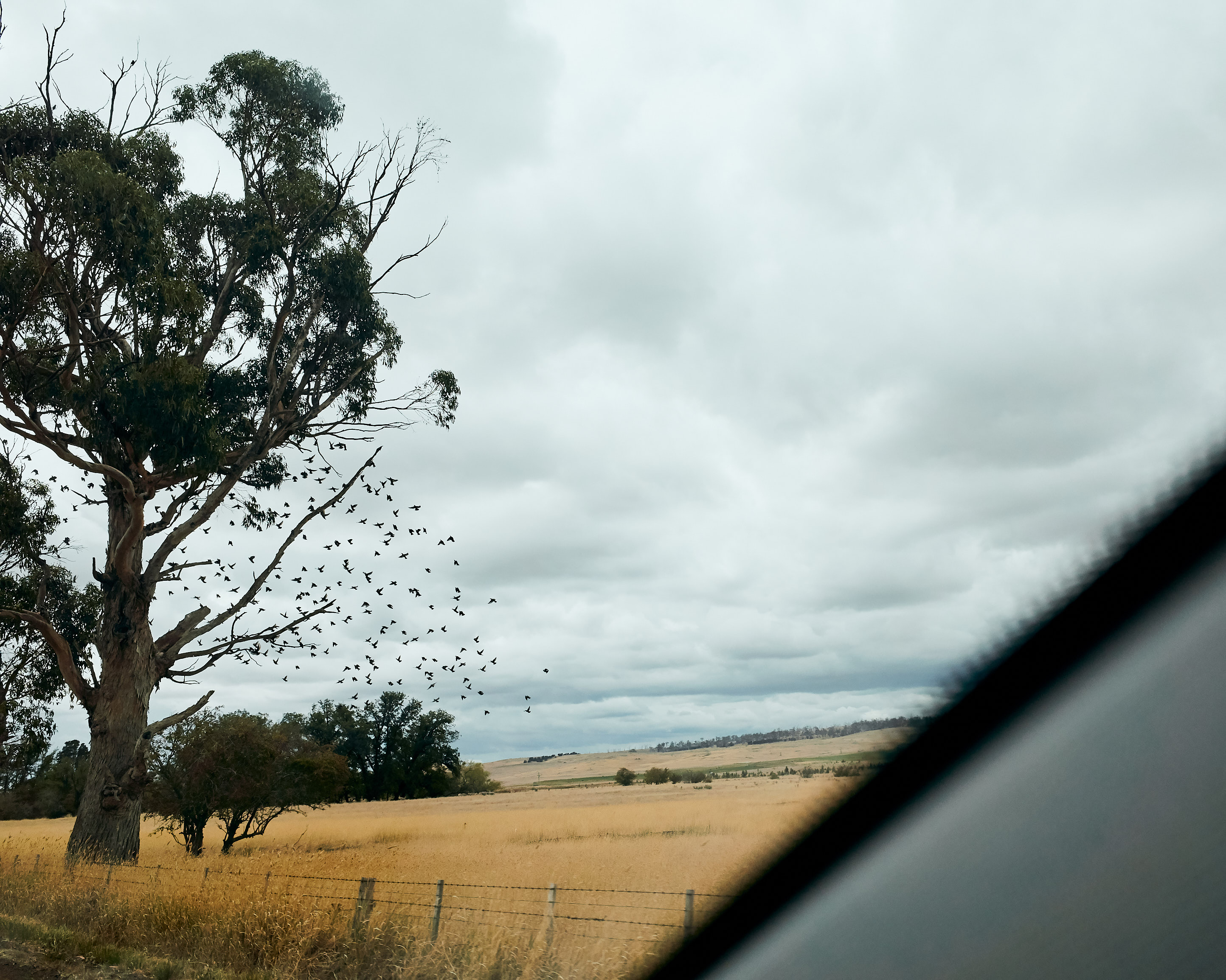 Melbourne-destination-wedding-photographer-Tasmania-launceston