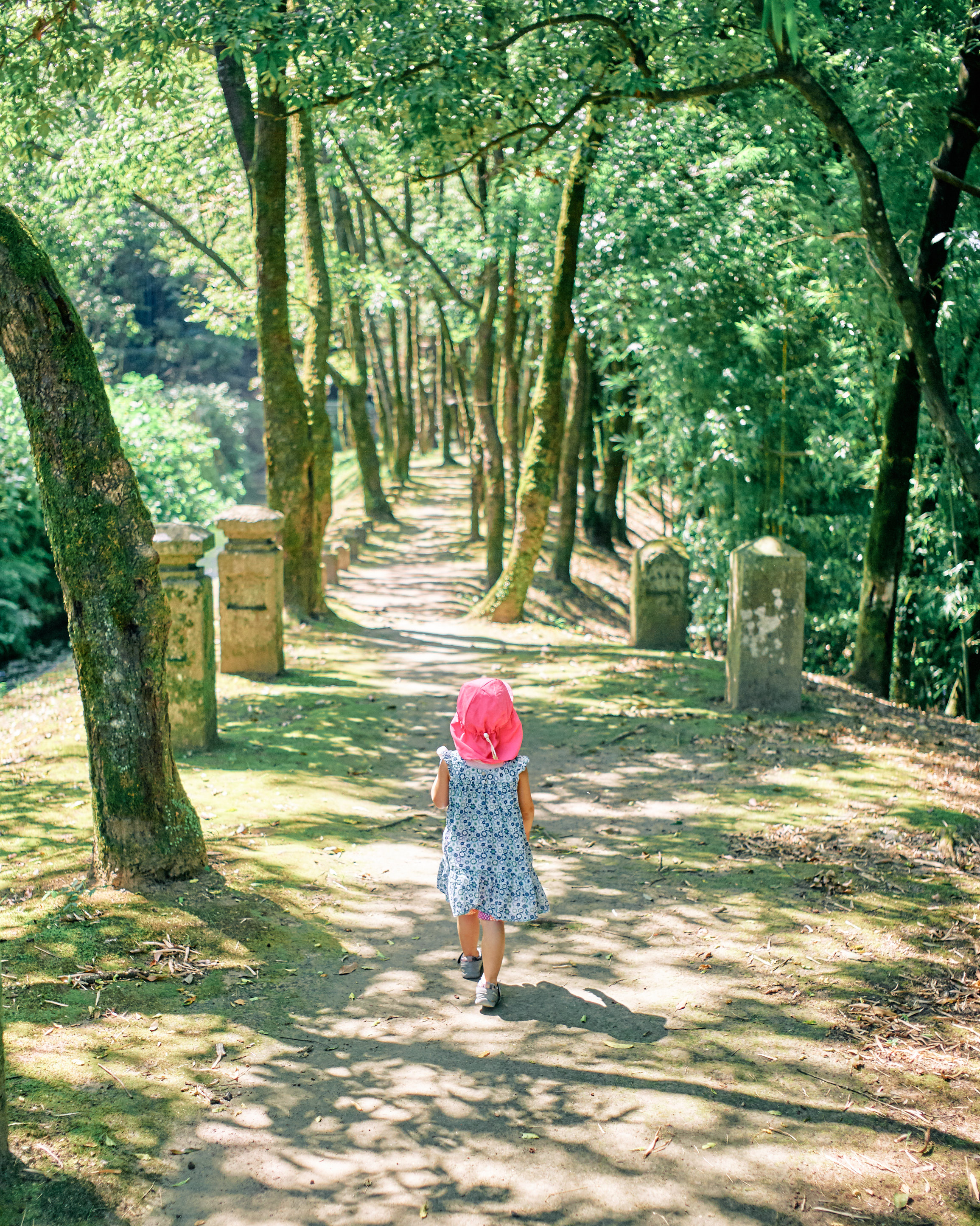 japan travel photographer kagoshima forest