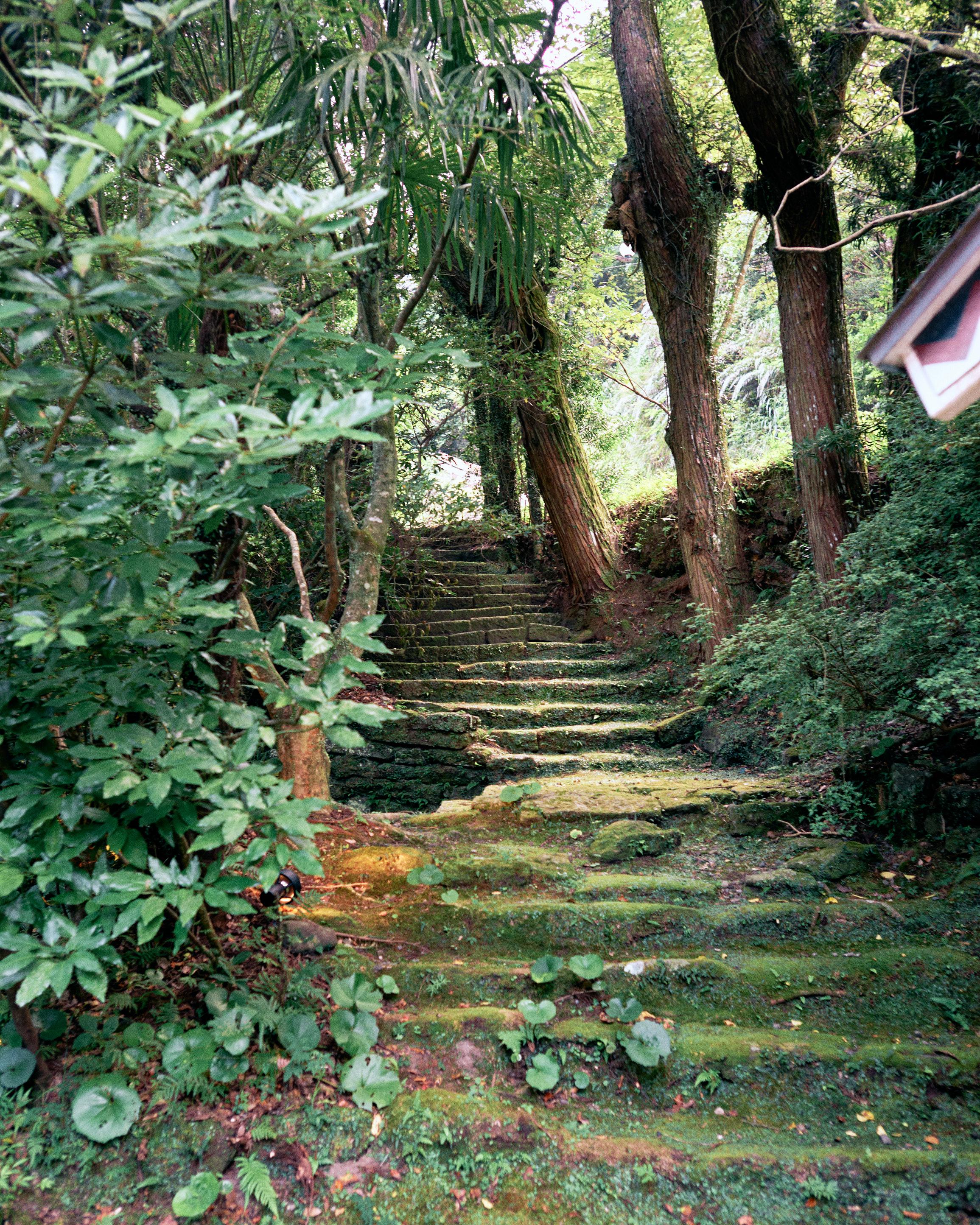 japan travel photographer kagoshima kirishima onsen forest