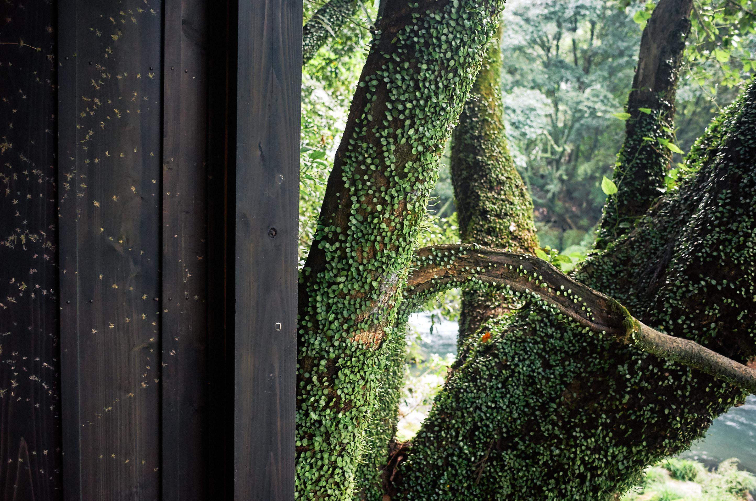 japan travel photographer kagoshima kirishima onsen plants