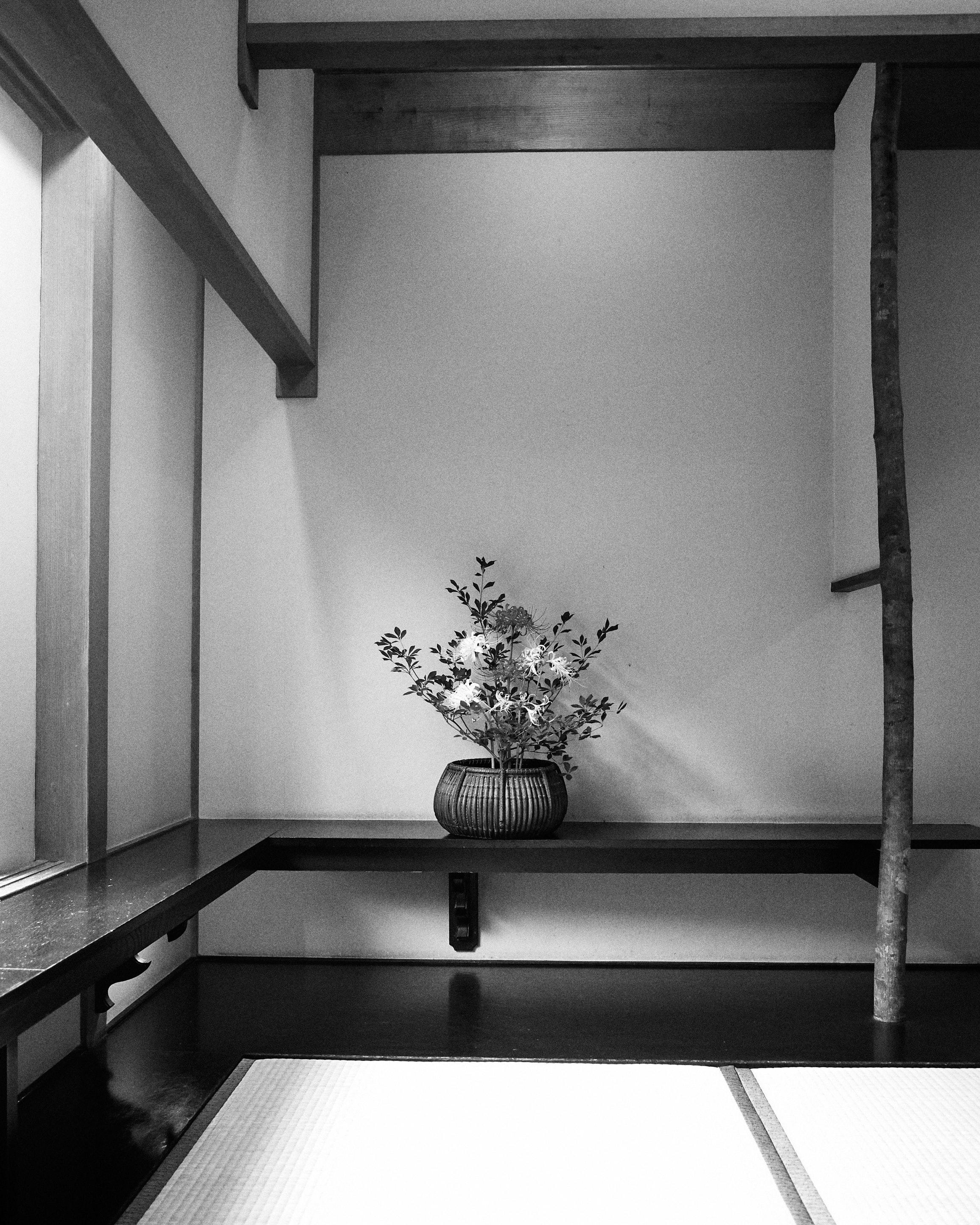 japan travel photographer kagoshima kirishima onsen ikebana