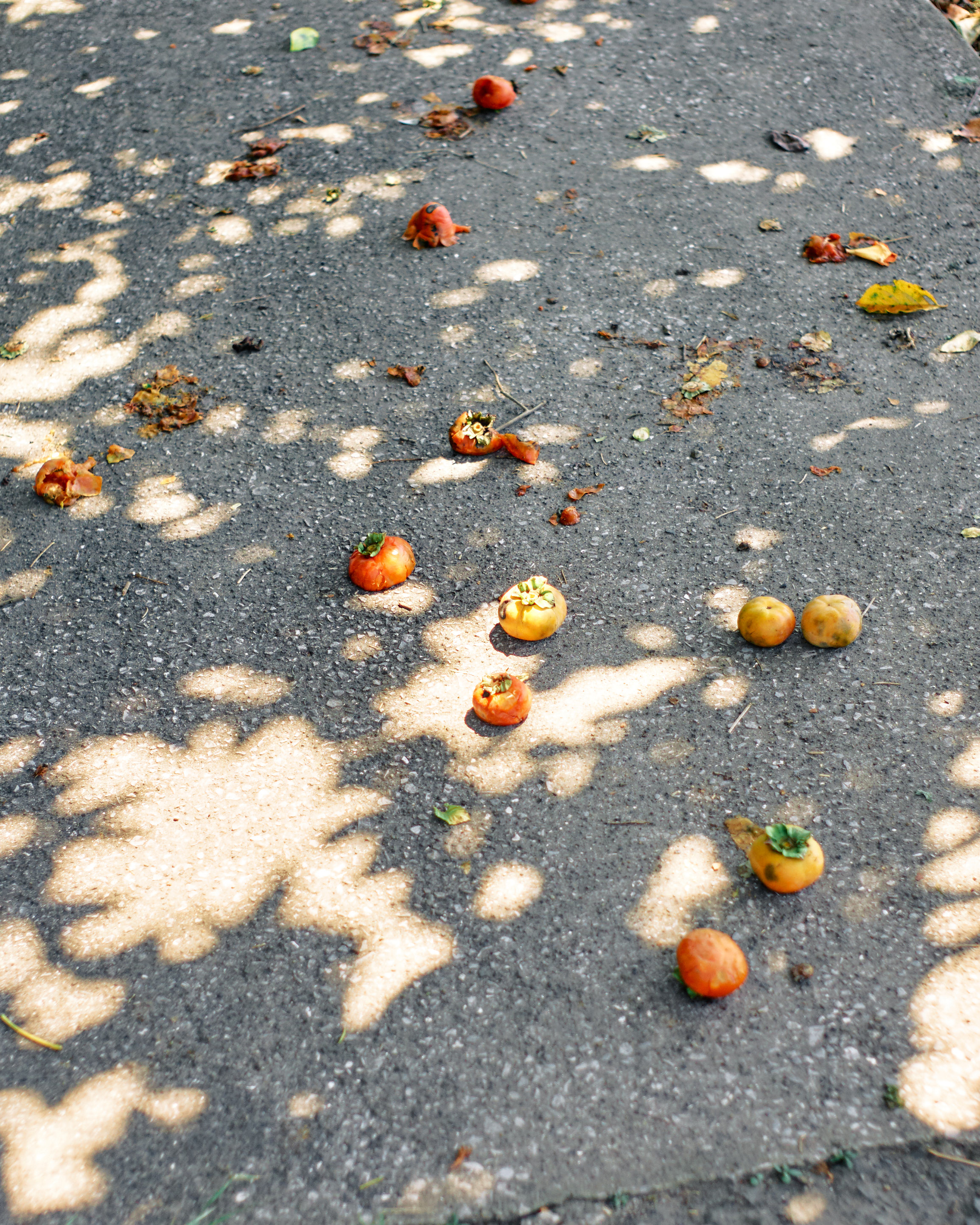 japan travel photographer kagoshima persimmon