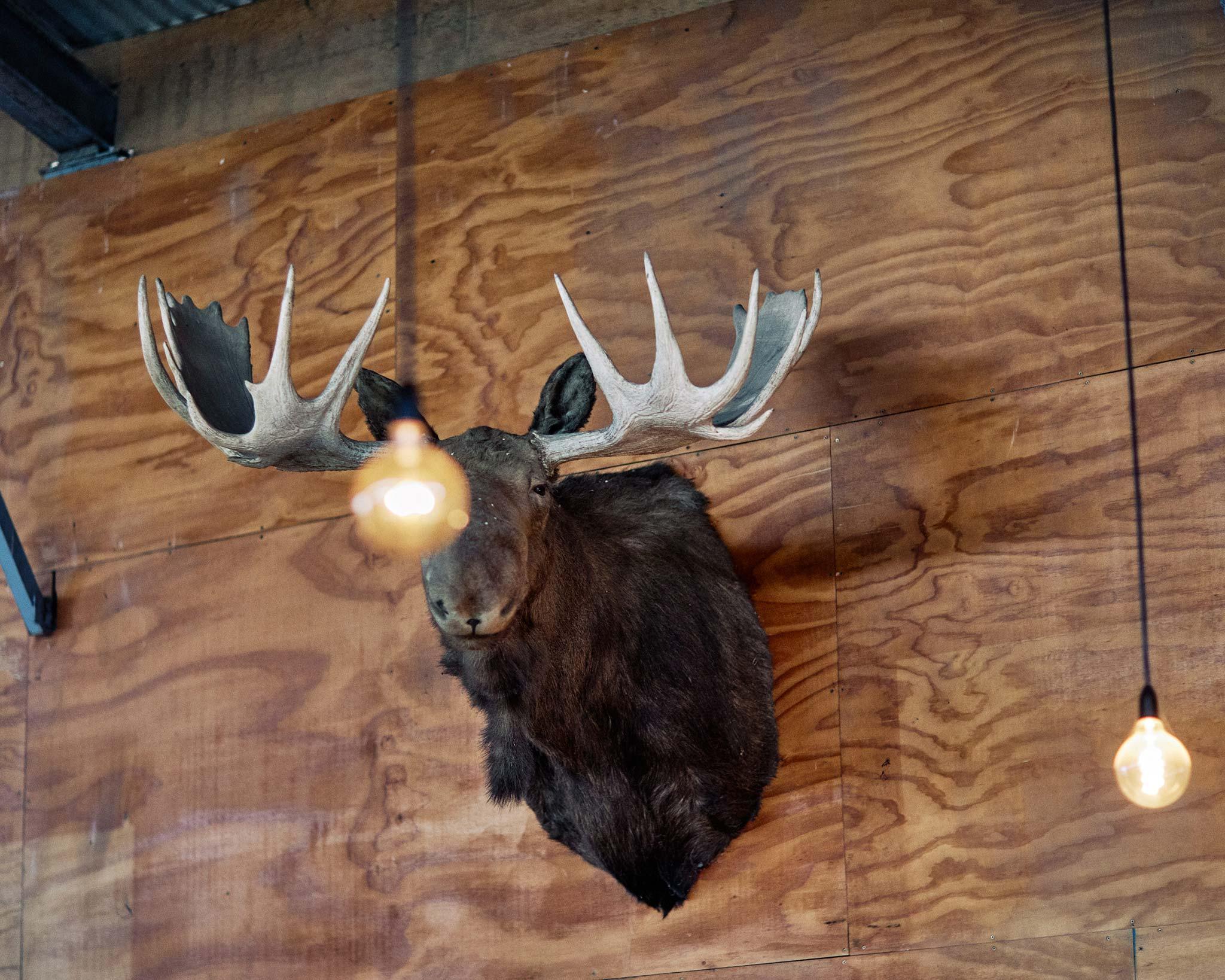 Zonzo estate wedding moose head